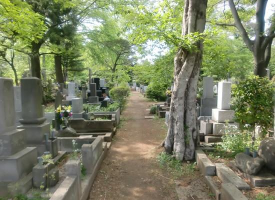 雑司ヶ谷霊園4